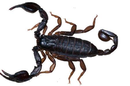 Scorpio exempted