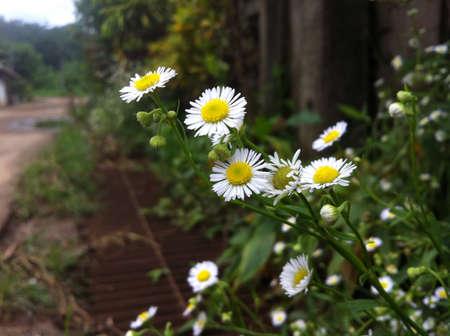 petites fleurs: Petites fleurs au bord d'une route dans un petit village