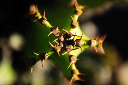 parte: La parte de arriba de un cactus vista en angulo cenital.