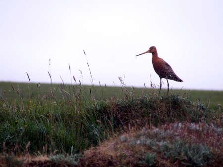 Nordic Bird