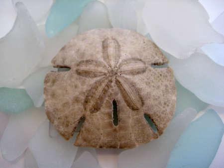 sand dollar: Vidrio y arena d�lar
