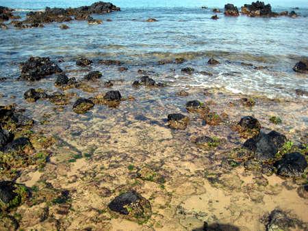 熱帯干潟プール