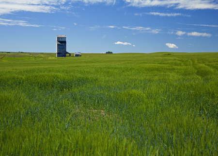 wheat field and grain elevator Banco de Imagens