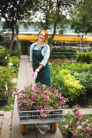 Joli fleuriste en tablier et gants roses regardant joyeusement à huis clos tout en se tenant debout avec des fleurs dans un chariot de jardin en serre.
