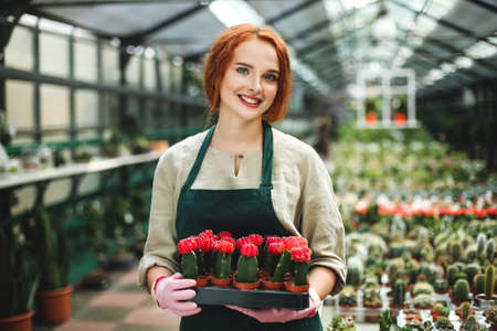 Pretty smiling florist in apron and pink gloves holding tray with little cactus flowers in pots and happily looking in camera in greenhouse. Stock Photo