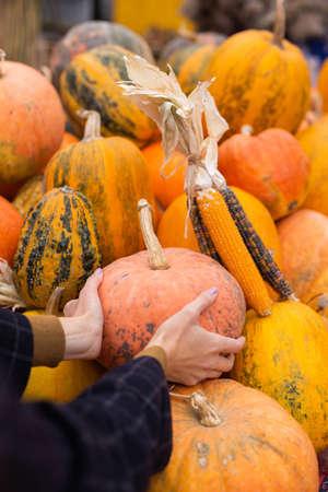 Close up woman choosing pumpkin at autumn farm shop outdoor