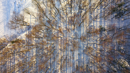 Winter forest trees sunny weather top view. Aerial flight above woods with sun light shining beams, bird eye perspective. Abstract snow forest background Archivio Fotografico