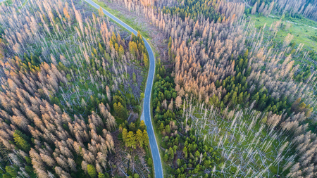 Aerial view of a country road in the forest. Beautiful landscape.  Captured from above with a drone Banco de Imagens