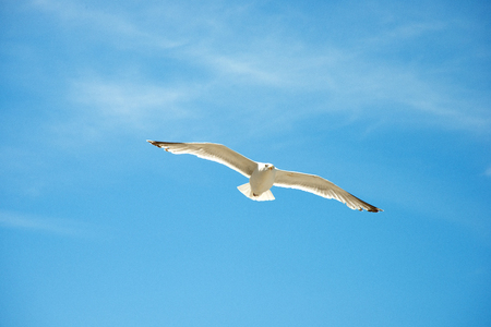 Seagull are flying in the blue sky and clouds background Standard-Bild - 109611230