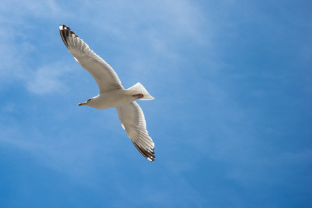 Seagull are flying in the blue sky and clouds background Standard-Bild - 109611279
