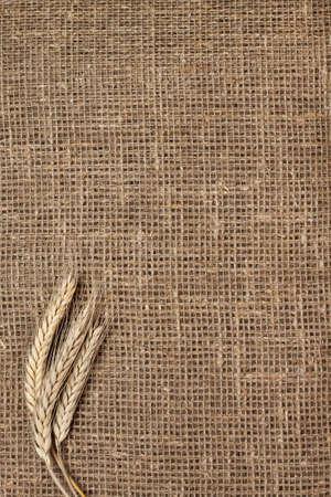 gunny bag: ears of rye on the sacking background