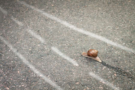 slowly: snail moving its own way concept Stock Photo