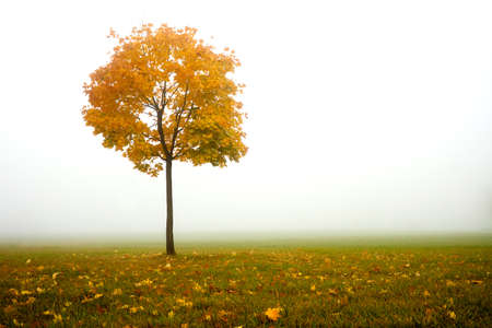 lonely autumn tree and fog Stock Photo - 15012827