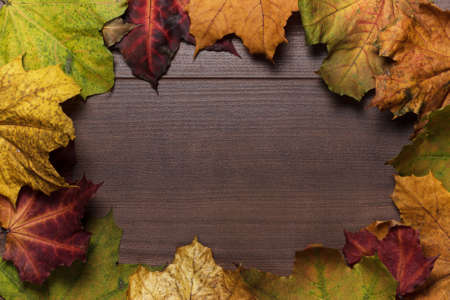 colorful autumn leaves frame on wooden background photo