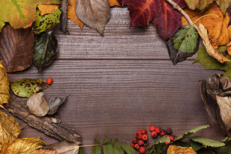 autumn grunge: colorful autumn leaves frame on the wooden background Stock Photo