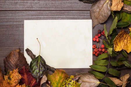 colorful autumn leaves and blank sheet of paper background photo