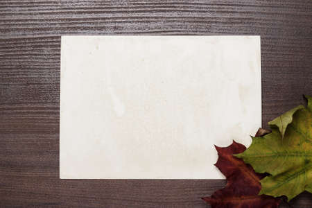 blanck: some autumn leaves and blanck old photo on wooden table