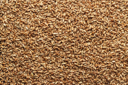 sprouting: wheat for sprouting on the wooden background