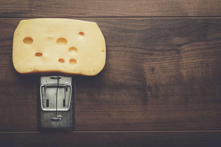 exterminate: very big piece of cheese in mousetrap concept