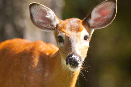 Young Deer Looking Imagens