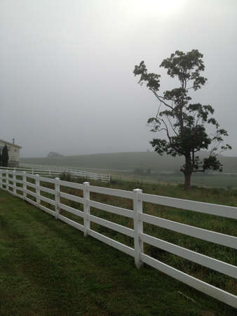 Foggy morning on Horse Barn Hill at Storrs Connecticut on the UCONN Campus Banco de Imagens
