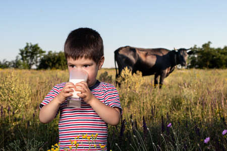 A small child boy in a striped bright T-shirt holds and drinks natural cows milk against a black cow in a field. Childrens food, milk in the diet of children, calcium, a full meal. 스톡 콘텐츠