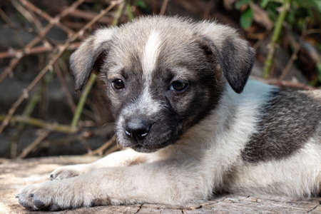 A little pooch sits on the street on a stump. Beautiful cute dog aged 2 months, pet