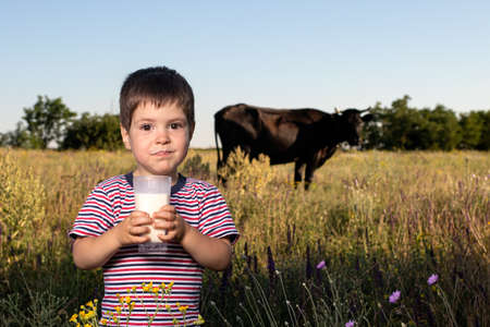A small child boy in a striped bright T-shirt holds and drinks natural cow's milk against a black cow in a field. Children's food, milk in the diet of children, calcium, a full meal