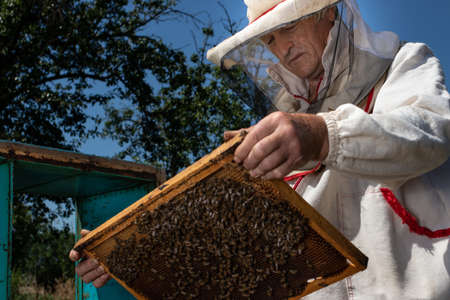 A man holds a frame with bees in his hands. A suit for a beekeeper, a jumpsuit and a mesh cap protection on the head 写真素材