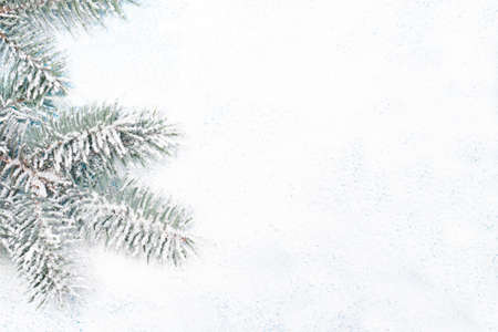 Spruce branch in the snow on a white snow-covered background with a place for copyspace text. New Year 2021, Christmas, for a postcard or a banner in a minimalist style