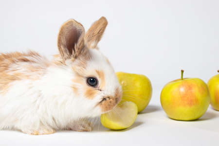 Little funny domestic rabbit play and eat apple on a white background. Food for the rabbit, bunny vitamins. For veterinary clinic, medicine and animal shop. Reklamní fotografie