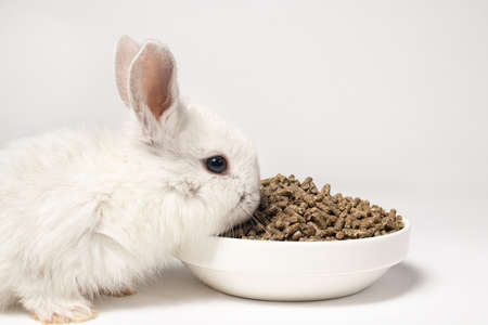 A small white rabbit eats feed on a white background. Balanced food for pets, pet food store