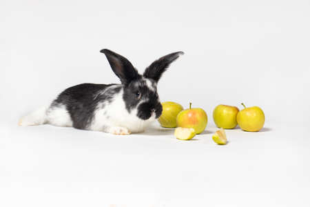 Cute white-black rabbit sitting near apples on a white background. Food for the rabbit, bunny vitamins. For veterinary clinic, medicine and animal shop. Reklamní fotografie