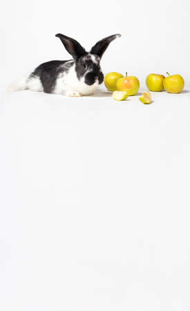 Cute white-black rabbit sitting near apples on a white background. For veterinary clinic, medicine and animal shop. Vertical photo with place for text copy space.
