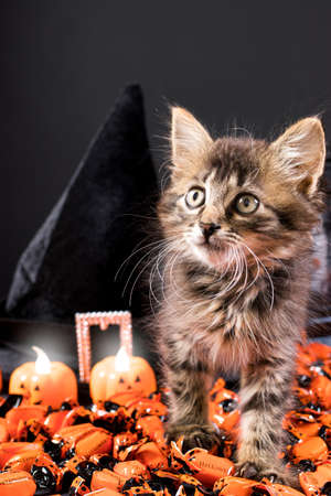 Halloween fluffy kitten walking on candy against the background of a hat and pumpkin candles on a black background vertical postcard