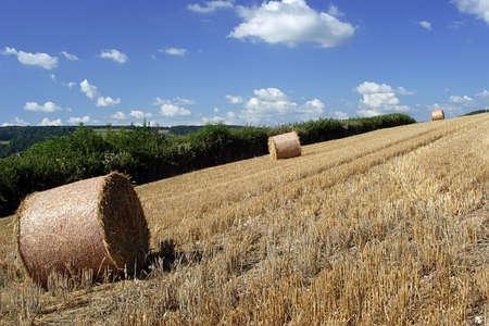 A Countryside scene of Devon, England. Stock Photo - 701933