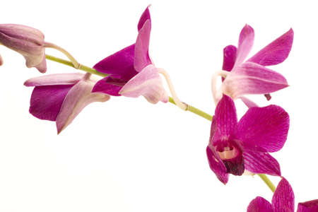 A pink orchid set against a plain background Stock Photo - 716656