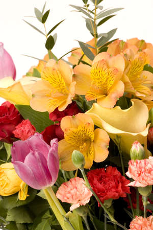 Tulips, Carnations & roses against a plain background