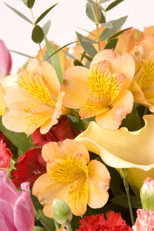 Tulips, Carnations & roses against a plain background Stock Photo - 716722