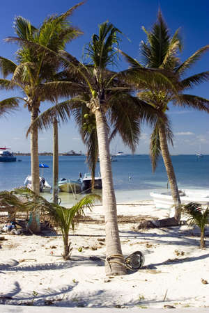 mujeres: Palm trees on a beach in Isla mujeres mexico Stock Photo