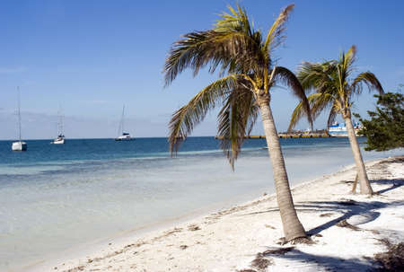 Palm trees on a beach in Isla mujeres mexico Stock Photo