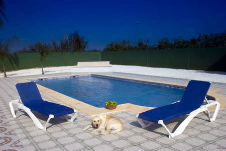 A Dog resting next to a swimming pool.