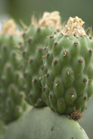 A close up of a cactus plant. Stock Photo - 3334285
