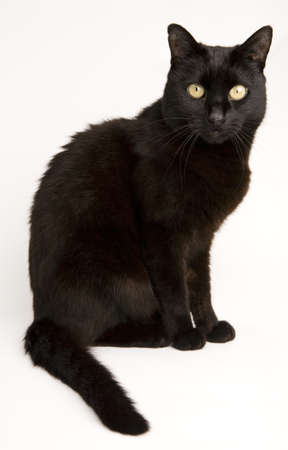 A black cat isolated on a white background.