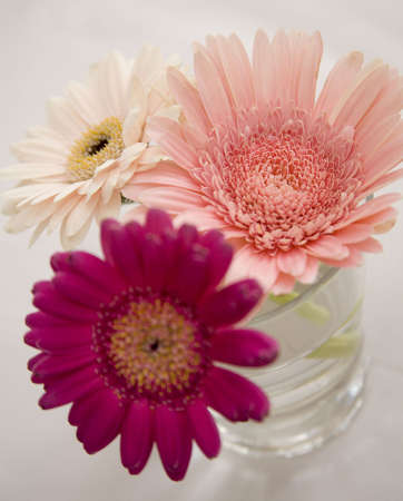 Gerbera daisies in a glass tumbler Stock Photo
