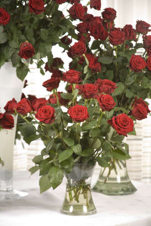 A close up of a Red Rose Stock Photo