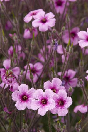 Vibrant coloured flowers in seasonal bloom. Stock Photo