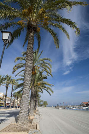 Palm trees along a beach promenade in Los Alcazares, Murcia. Spain. Stock Photo