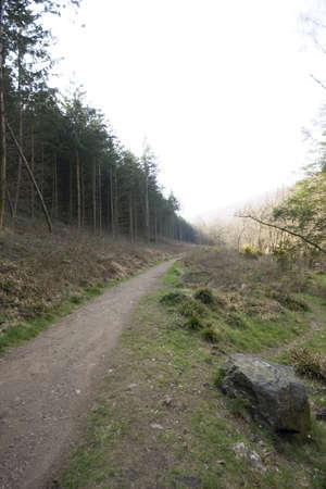 A wooded pathway through Dartmoor in Devon.