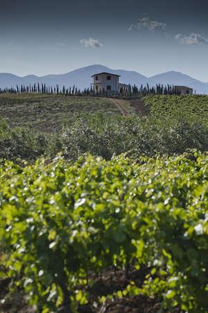 alcamo: The countryside around Alcamo in the distric of Trapani in Sicily